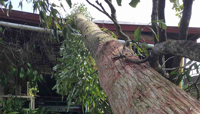 Treesafe Australia - Tree Services Near Me - Storm Damage Clean-up & Insurance Work