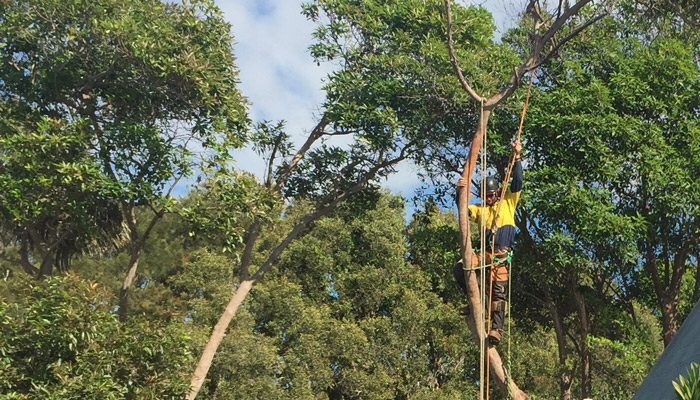 Treesafe Australia - Tree Services Near Me - Tree Pruning