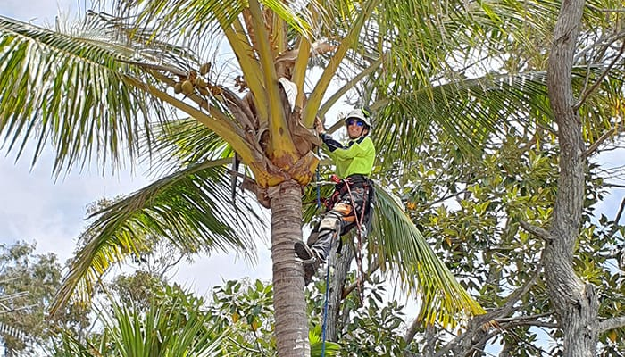 Sunshine Coast Tree Pruning