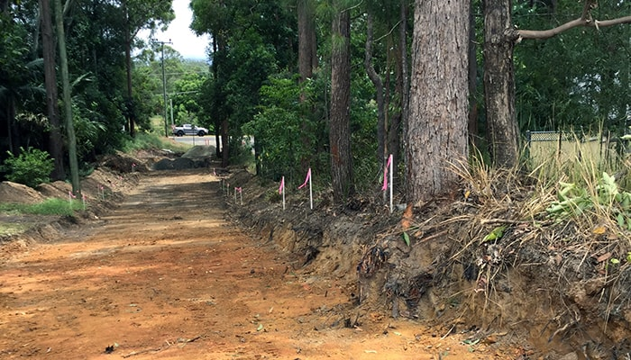 Sunshine Coast Tree Safety Assessment And Reports