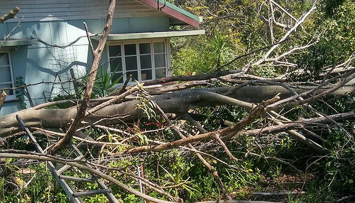 Sunshine Coast Storm Damage Clean-up
